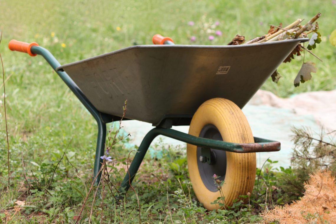 Kokku tasub koguda ja hävitada kõik haigestunud taimed, et haigus tervetele taimedele edasi ei kanduks. Foto: Pixabay
